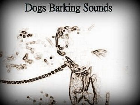 Woof, ruff, bow-wow, yap, and howl - who likes #dogs barking sounds? Watch the little funny video: http://www.youtube.com/watch?v=Dayj6SlxYjs
