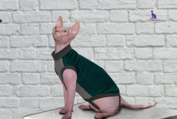 Emerald. Clothing for cat. Blouse for cat. Сat by VioletCatpets