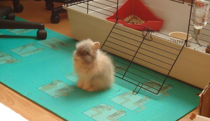 Les 25 meilleures id es de la cat gorie rabbit cages sur for Abreuvoir lapin fait maison