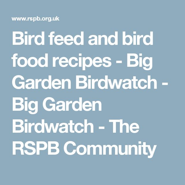 Bird feed and bird food recipes - Big Garden Birdwatch - Big Garden Birdwatch - The RSPB Community