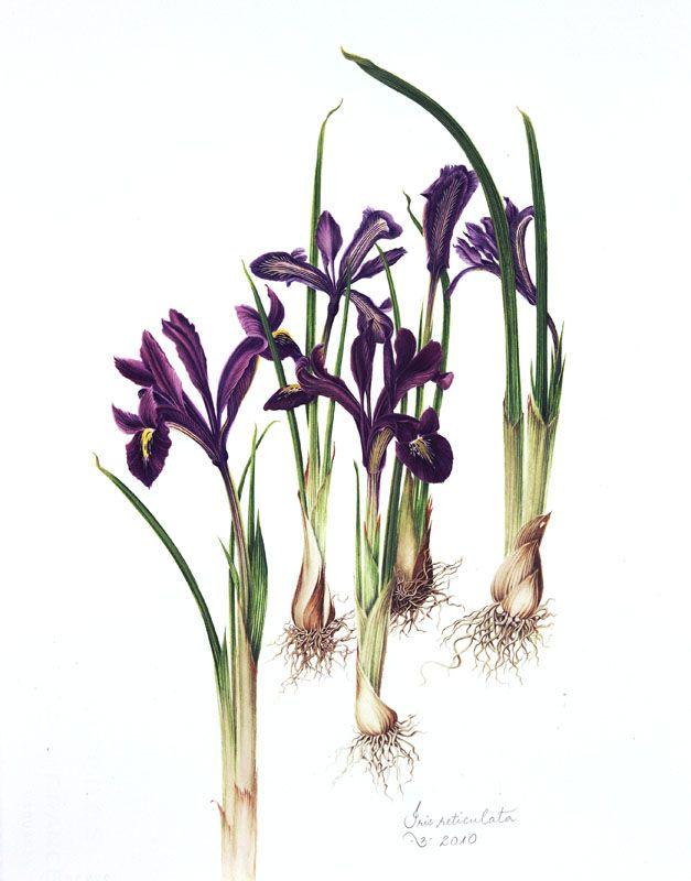 17 best images about vita 39 s flowers on pinterest gardens. Black Bedroom Furniture Sets. Home Design Ideas