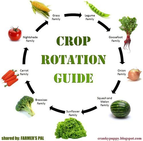 Crop Rotation Tips For Better Gardening Results
