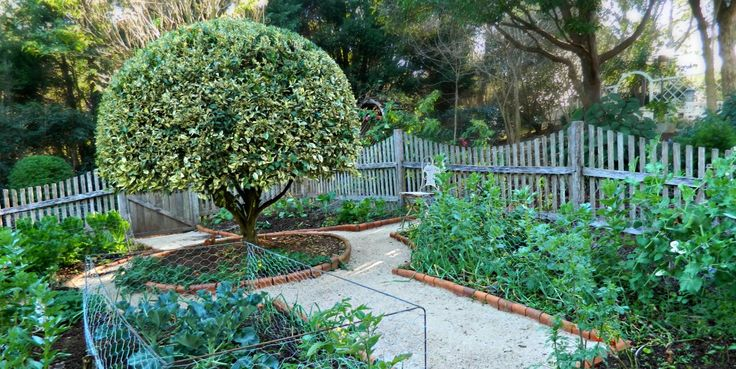 The picking garden at Chelsea Blue