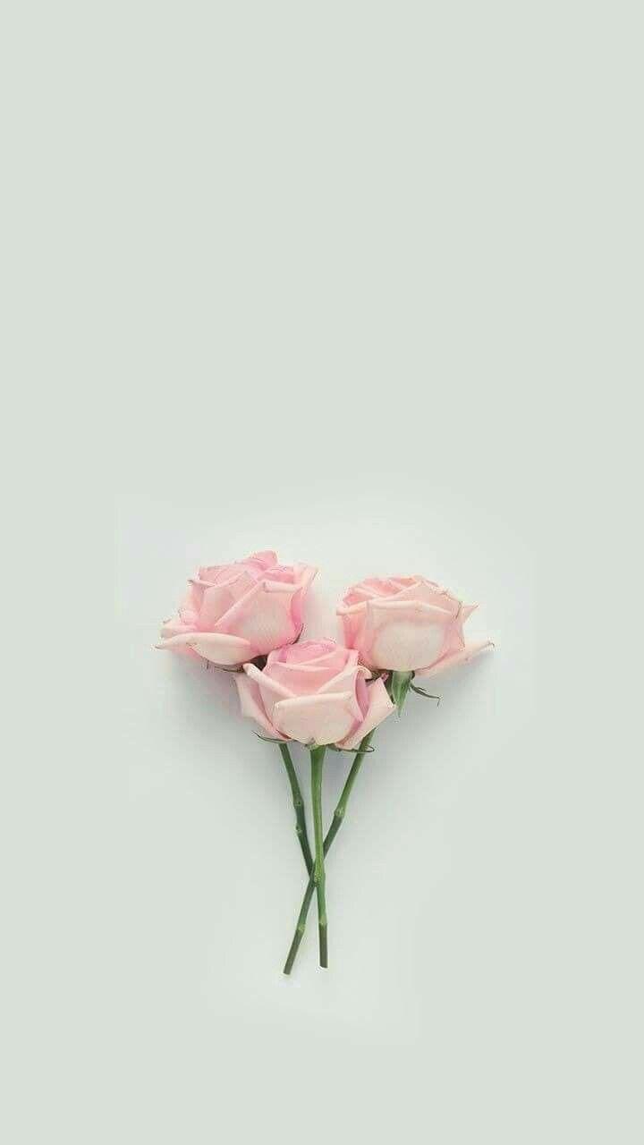 Pin De Ghada Moustafa Em Flowers Papel De Parede Floral Rosas