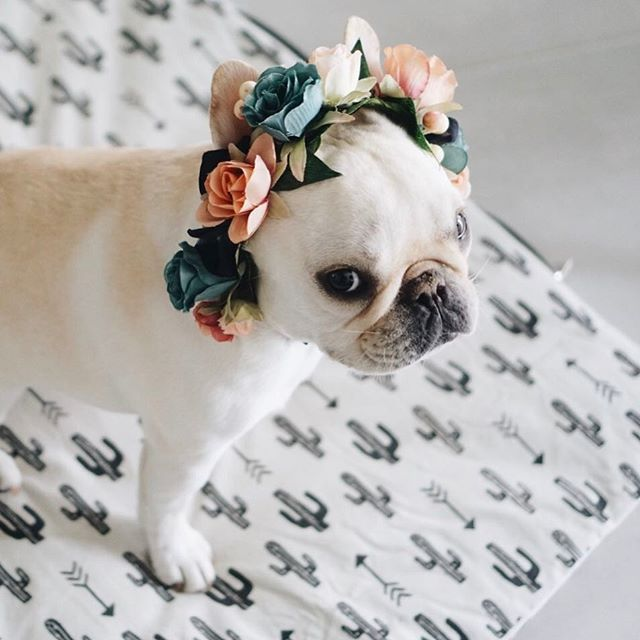 Floral Frenchie | piggyandpolly