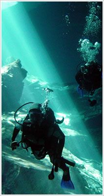 """Cenote -Mexican Yucatan """"Limestone sink holes"""" go all the way back in Maya lore and ritual"""