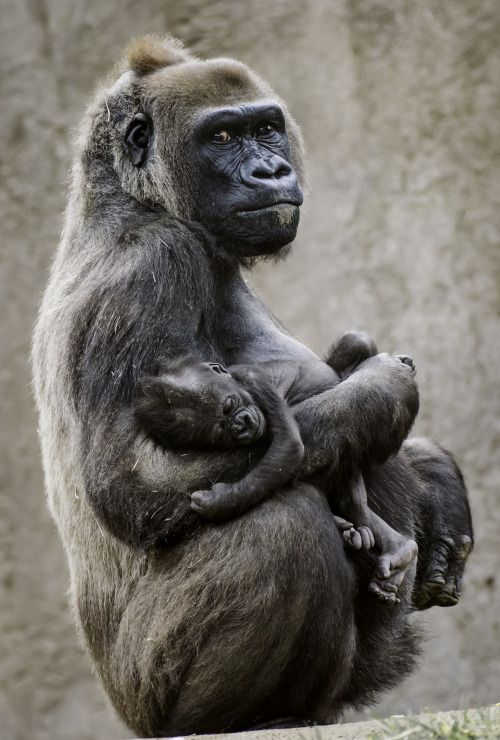 Moments of motherhood ❤️(photo by Paul E.M.)