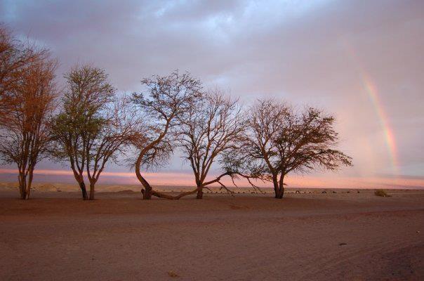 San Pedro de Atacama- Norte de Chile    Can you see the tip of the rainbow arching over these trees in the hot Atacama Desert near Pozo Tres in San Pedro de Atacama? We think it means good luck!