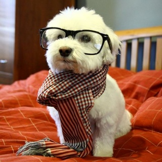 hipster pups!