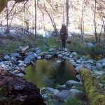 Sulphur Springs in the Klamath National Forest - there have been Bigfoot sighting reports in this area, twelve miles north of Happy Camp, along a one-lane forest road.