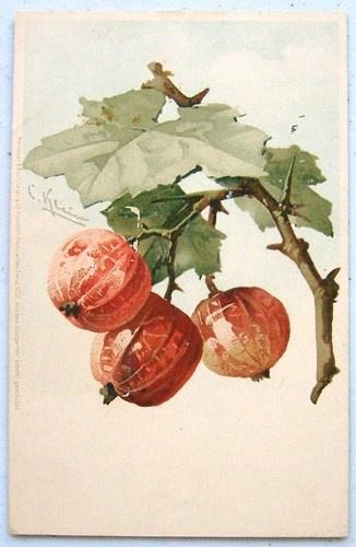 C. KLEIN Fruit BERRIES