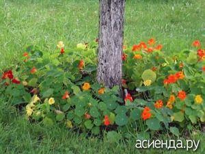 Часто территория под деревьями остаётся без должного оформления. А на самом деле это место можно использовать под цветы и создать интересные проекты в приствольных кругах. Читайте подробности о подборе растений и оформлении.