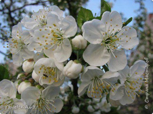 Доброго времени суток Всем! Решила сделать мк яблоньки  из зефирки упрощённый,то есть когда надо очень быстро)))) фото 1
