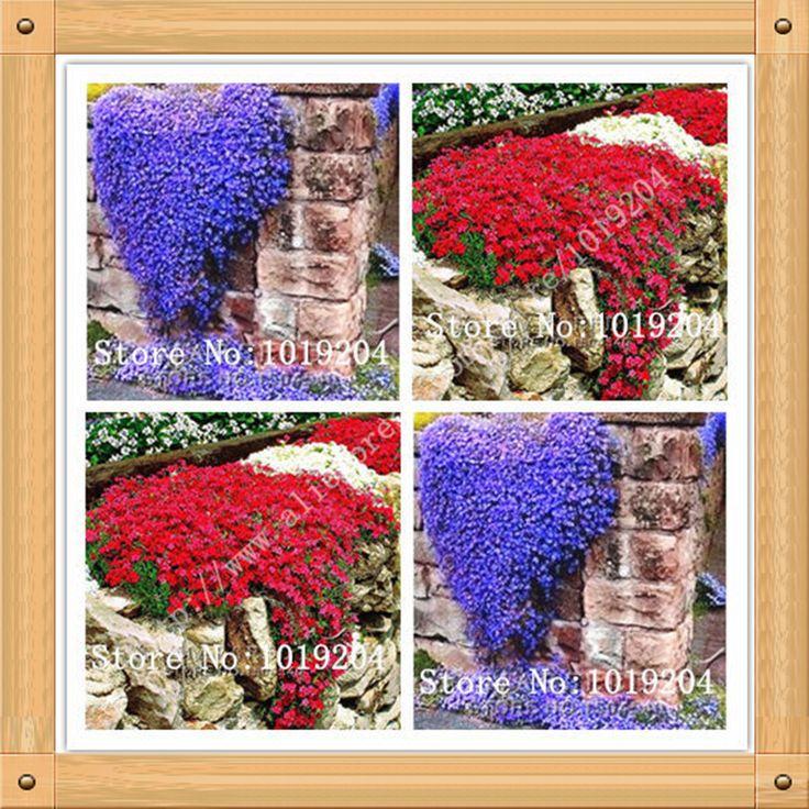 Купить товар200 ШТ. духи вьющихся растений семена цветов, фиолетовый, red rock climbing plants, двор является самым красивым в категории Карликовые деревьяна AliExpress. 200 ШТ. духи вьющихся растений семена цветов, фиолетовый, red rock climbing plants, двор является самым красивым