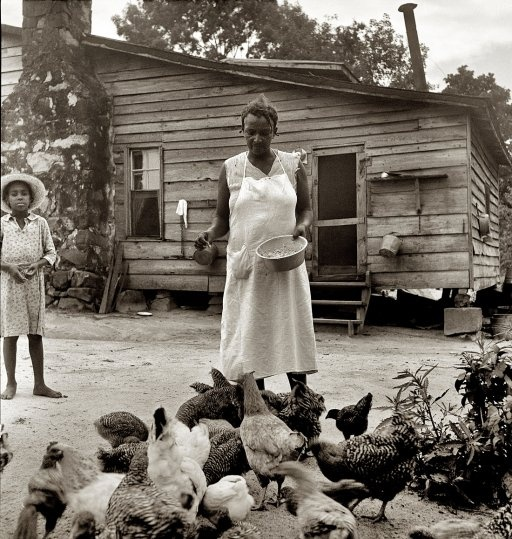 "July 1939. ""Noontime chores: feeding chickens on tenant farm. Granville County, North Carolina."" by Dorothea Lange"