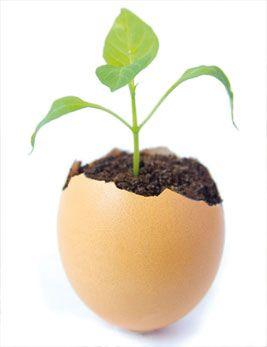 Un œuf fait de plantes pour remplacer ceux des poules