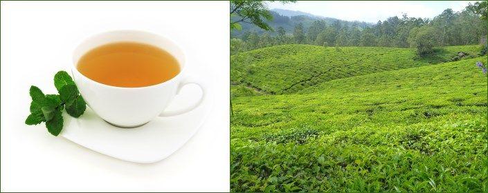 11 Weeks to better skin - Week #2 - Green Tea