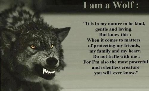 Wolves, Wolf quotes and Quotes about strength on Pinterest Wolf Quotes About Strength