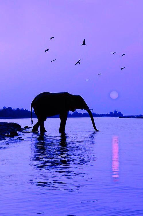 Elephants At A Watering Hole At Sunset