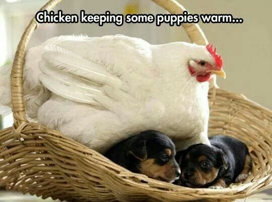 Go home chicken ur drunk
