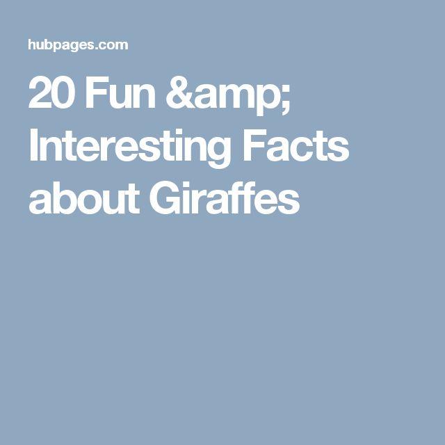 20 Fun & Interesting Facts about Giraffes