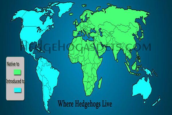 Where hedgehogs live around the world