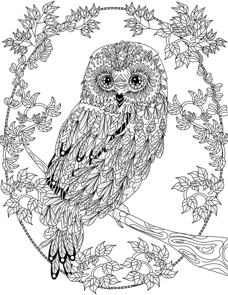 zentangle owl coloring pages - photo#34