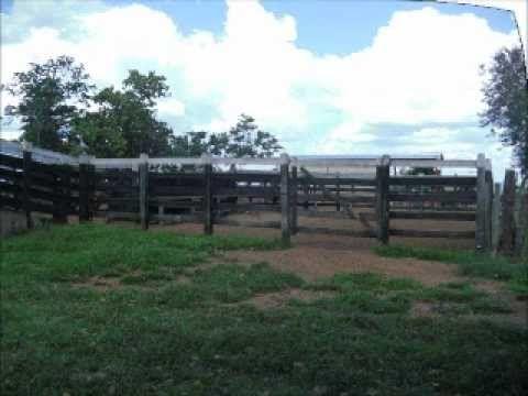 Fazenda a venda! 500ha  - Costa Rica/MS