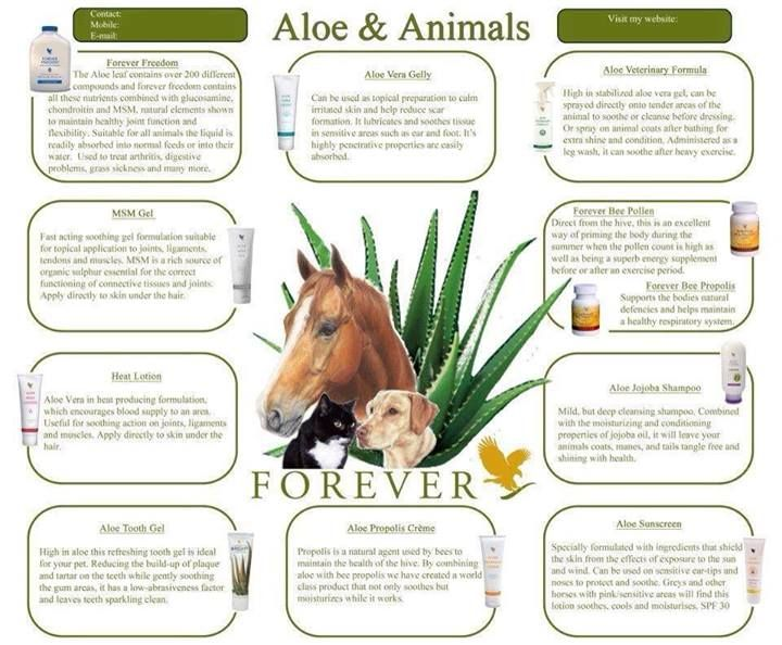 Aloe Vera products are good for pets too! Handy Nummer : 0176 82654343 My Aloe Vera Forever Living Shop http://www.be-forever.de/aloevera-wellness-shop/ Please email wellnessemy@outlook.de Sponsors Details Name: Emerita Kaufmann ID Number: 490-000-524-516 http://www.facebook.com/Bambusmassage.