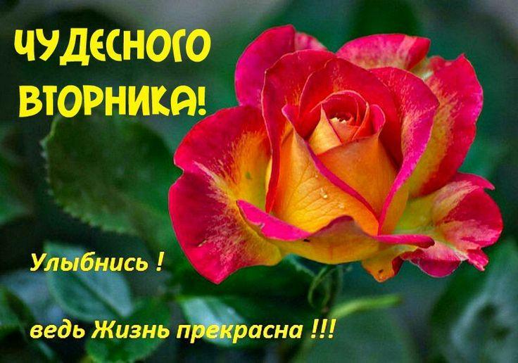 Поздравление с вторником в открытках, поздравлением