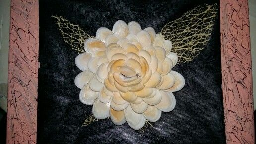 Flor de conchas de mar