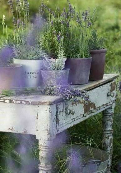 17 best images about lavander on pinterest lavender tea ana rosa and lavender lemonade. Black Bedroom Furniture Sets. Home Design Ideas
