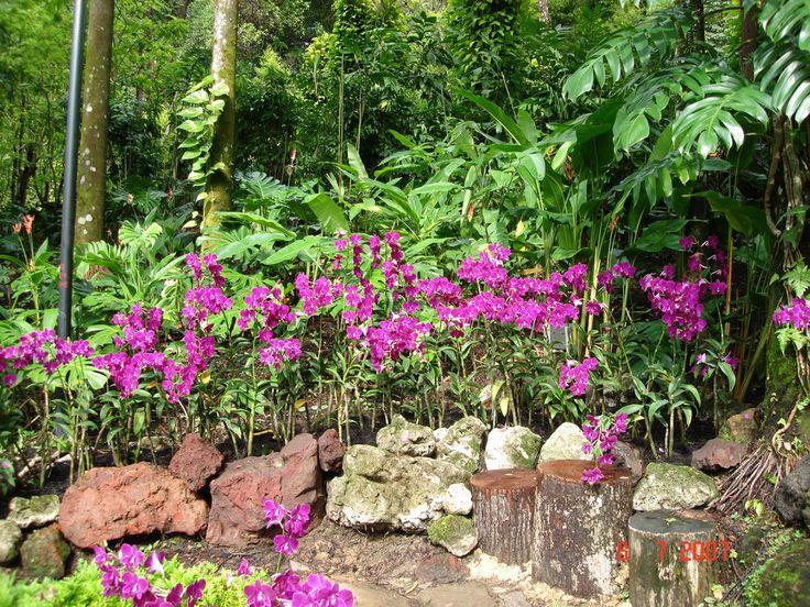 Orchid Garden Singapore | Singapore Orchid Garden By Matt In
