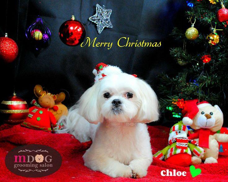 Merry Christmas Chloe!