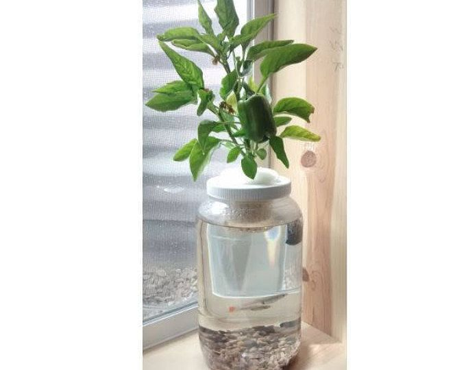 1 Gal Aquaponics Kit w/Air Pump Gravel Fish Garden Aquaponic Window Sill Jar Indoor Air Pump Aquarium Fish Tank Aquaculture Hydroponics Gift
