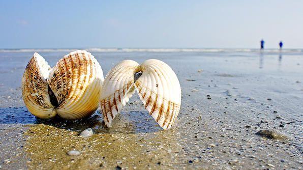 Kiawah Island, SCSummer Vacations, Best Beach, Beachwalk Parks, Vacations Spots, Families Beach, Summer Buckets Lists, Kiawah Islands, Things To Do, South Carolina