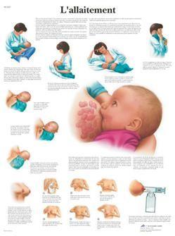 Planche Anatomique sur l´allaitement maternel