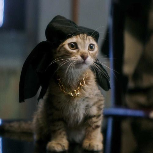 Meet Keanu, the cutest kitten ever and after being abducted by a gang the most gangsta kitten ever.