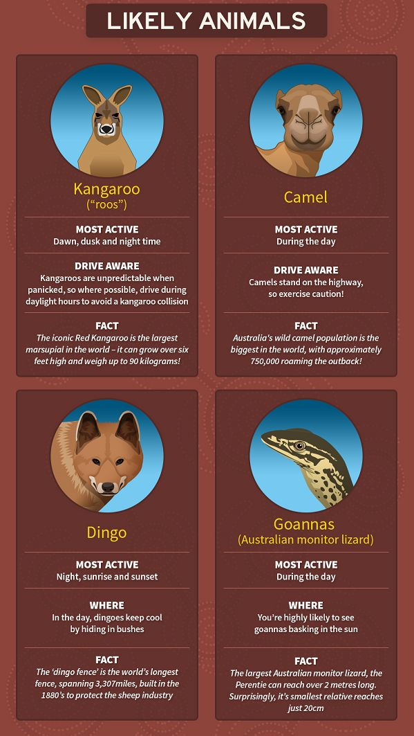 Beyond the people you'll meet on your journey, expect to get well acquainted with some other Australians. | This Is The Perfect Cheat Sheet For Exploring The Australian Outback