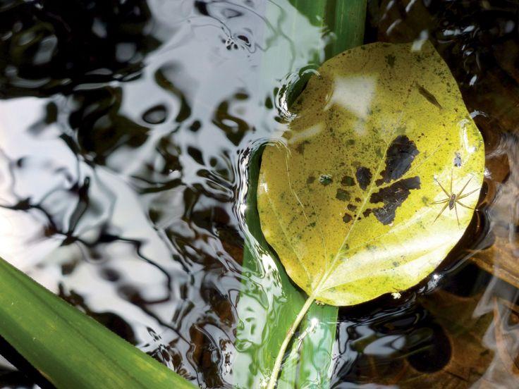 Cap Tribulation - Queensland, Australia 2011  #Oz #australia #north #travel #lake #voyage #pluie #soleil #wild #foret #wood #spider #leaf