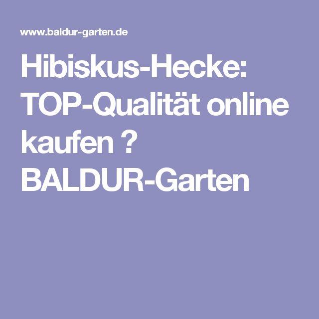 Hibiskus-Hecke: TOP-Qualität online kaufen  BALDUR-Garten
