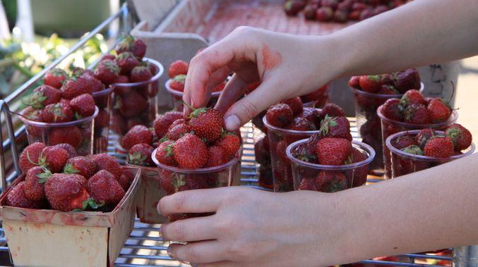 fresh strawberries at the organic farmers market at Toronto Botanical Garden