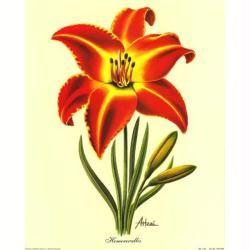 best 20+ image fleur rouge ideas on pinterest | rouge coquelicot