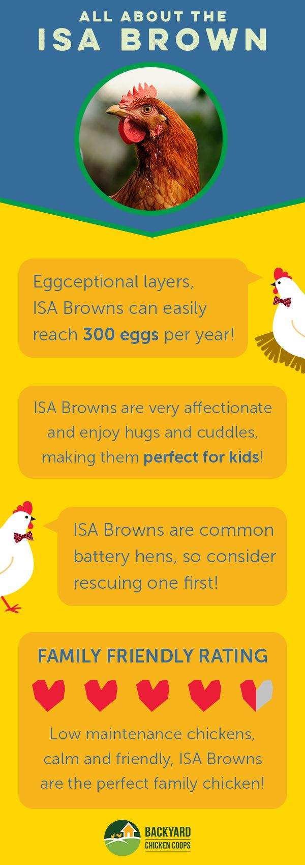 Isa Brown chickens are a common breed and for good reason too! They are prolific egg layers, family friendly and an all round great chicken. You can check out their breed profile for more information here, http://www.backyardchickencoops.com.au/isa-brown/  #loveyourchickens  #breedprofile #isabrowns