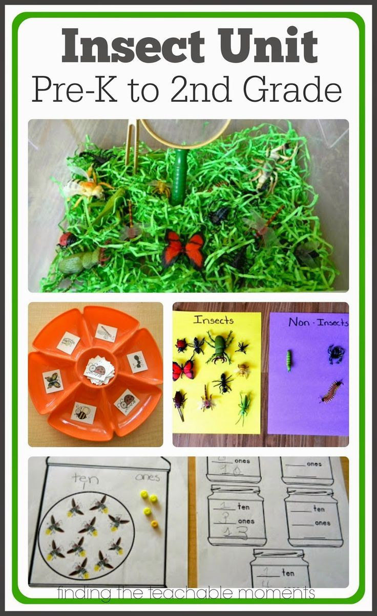 Insect Unit-> Includes ideas for math, science, literacy, and snacks for Preschool thru 2nd grade.