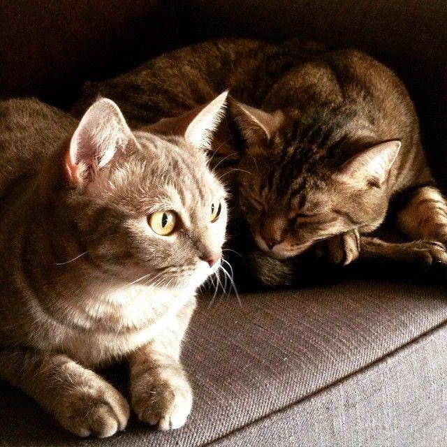 Che coppia...  #micettidolci #micetticarini #houseanimal #happy #gatti #ZambelliAfterDark
