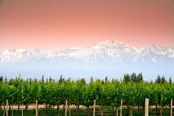Mendoza lies in the heart of Argentina's wine country, a vast, lush land of grapevines stretching into the shadows of the majestic Andes.