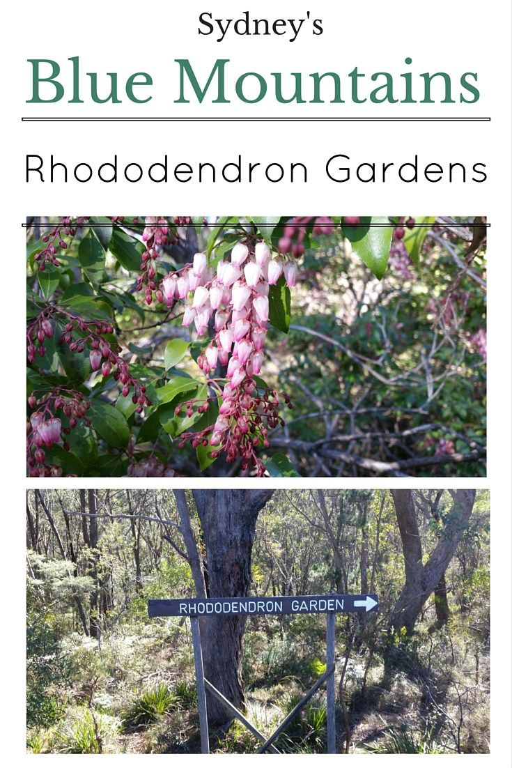 Campbell Rhododendron Gardens Blackheath Blue Mountains