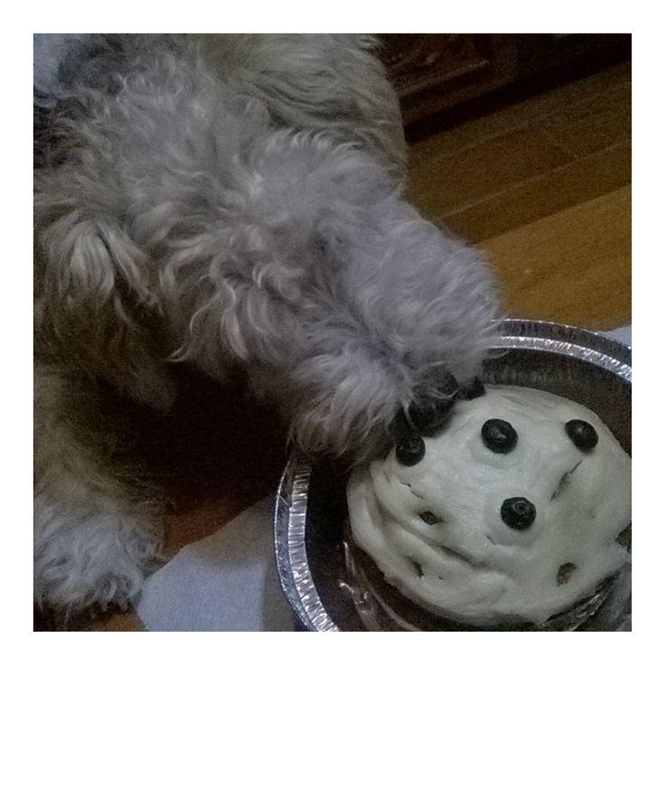 Biscuitii HamYum. http://hamyum.ro/