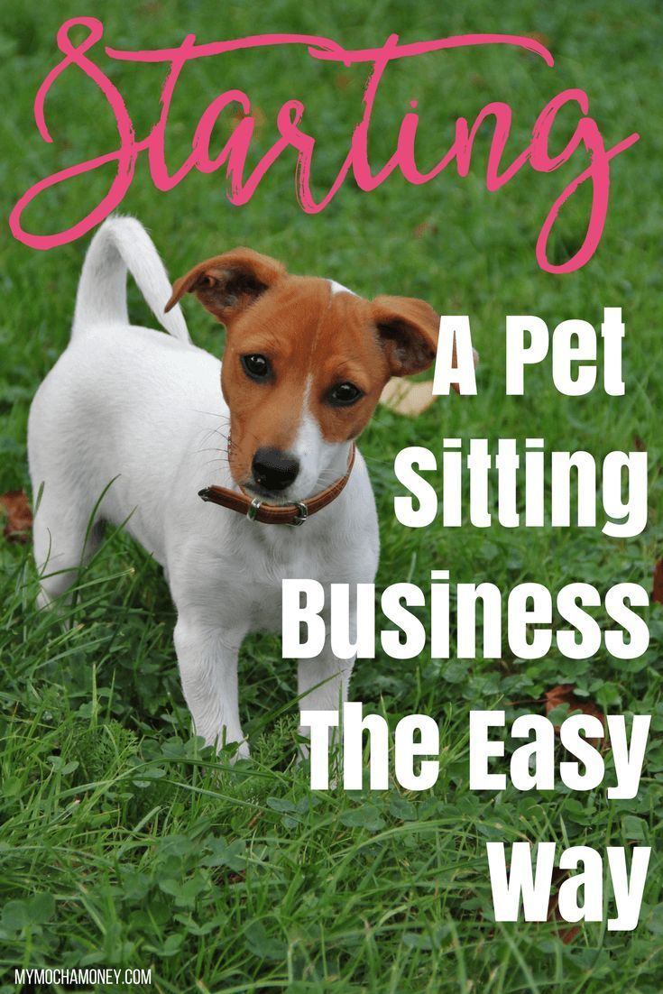 Pet Sitting Business The Easy Way